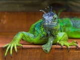 Rant of the Week: Are Reptiles Controlling Our Oil Supply?